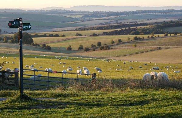 Signpost to Sheepdrove Organic Farm