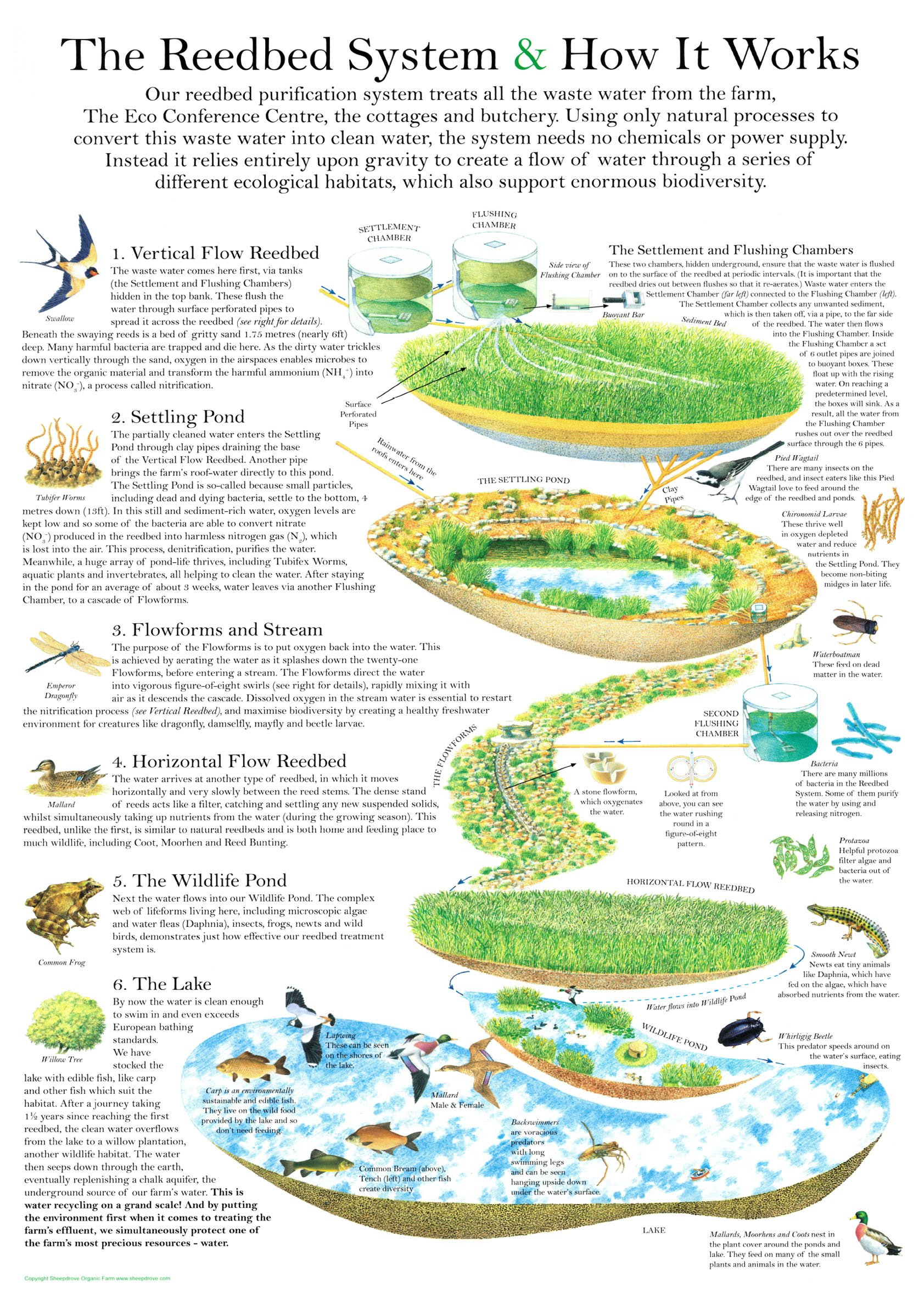 reedbed system map
